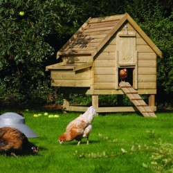 Large Chicken Coop - Natural Timber